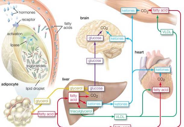 کمبود اسیدهای چرب امگا ۳ و ناباروری در مردان/ دکتر پرویز قدیریان