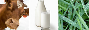 سیاست جلوگیری از مصرف شیر خام/ دکتر پرویز قدیریان