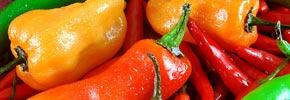 فلفل تند و کاهش وزن بدن/ دکتر پرویز قدیریان