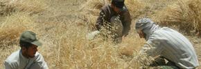 کارگران کشاورزی ایران