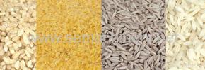 برنج مصنوعی به بازار آمد/ دکتر پرویز قدیریان