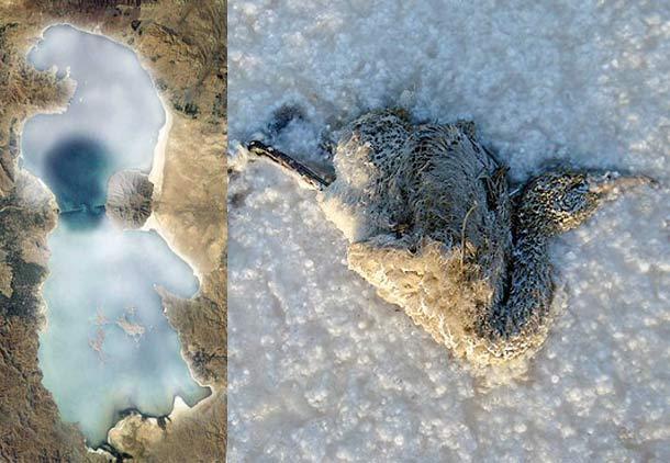 محیط زیست ایران قربانی حکومت جمهوری اسلامی/ مهرداد مهرپور محمدی