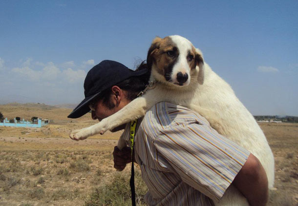 چهار اکتبر روز جهانی حیوانات/فرح طاهری