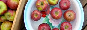 طرز انتخاب غذای سالم/ دکتر پرویز قدیریان