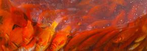 ماهی قرمز کوچولو/دوستداران وفا
