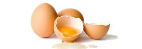 روش های سالم تهیه و نگهداری تخم مرغ/ دکتر پرویز قدیریان