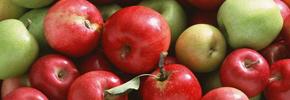 سیب را بهتر بشناسید/ دکتر پرویز قدیریان