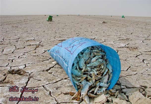 تلاش برای نجات هامون به خطر افتاده در شرق ایران