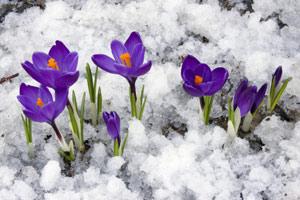 بهارانه ها/خالدبایزیدی(دلیر)