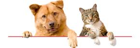 بیماری های قلبی در سگ و گربه خانگی/دکتر داور شهیری بناب