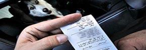 طرح نمایندگان مجلس: ۷۴ ضربه شلاق برای سگگردانی یا سگبازی