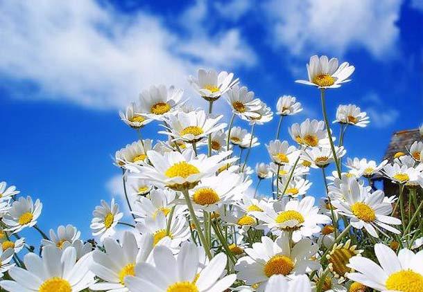 همه جا بوی بهار می دهد/حسن گل محمدی
