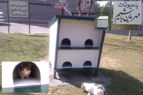 cat-house--tabriz