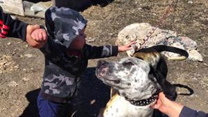 سگی جان سه انسان را از مرگ نجات داد