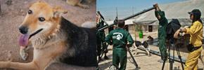 راه های کمک به حیوانات بی سرپرست در ایران