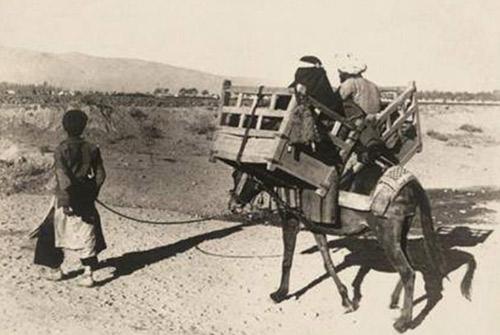 donkey-travel