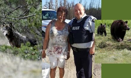 نجات زن کانادایی از چنگال گرگ به همت خرس