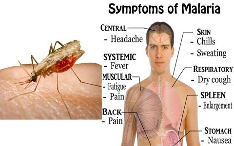 مالاریا/محمد رحیمیان