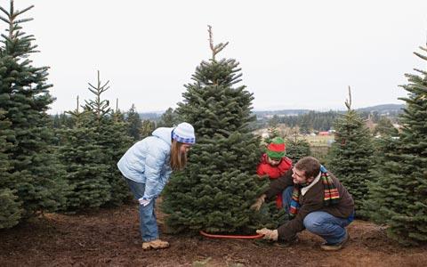 چرا باید برای کریسمس درخت واقعی بخریم؟