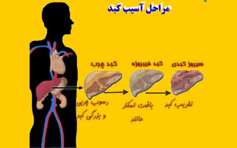 سیروز/دکتر عطا انصاری
