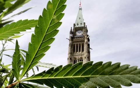 سن قانونی مصرف ماری جوانا در کانادا به ۱۸ سال تقلیل می یابد