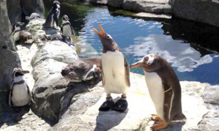 هفت پنگوئن در باغ وحش کلگری غرق شدند