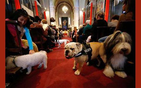 سکوت ادیان در رابطه با حیوانات/فاطمه معتمدی