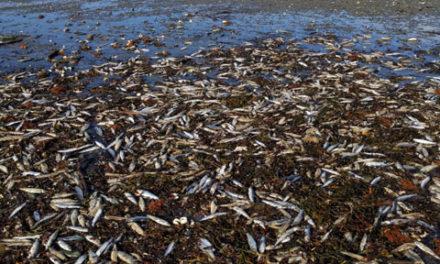 مرگ مشکوک هزاران موجود دریایی در سواحل نوا اسکوشیا