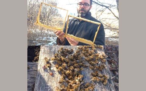 کشته شدن هزاران زنبور و دزدی عسل در یک زنبورداری تورنتو