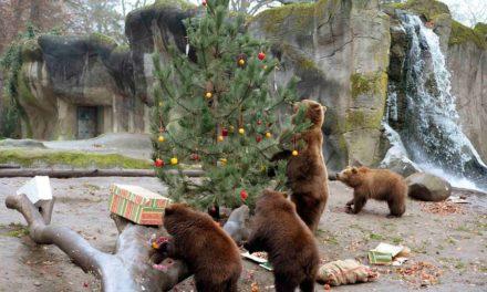 درختان کریسمس اسباب بازی های جدید حیوانات در باغ وحش تورنتو