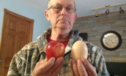 تخم مرغ ۱۸۰ گرمی در Echo Bay انتاریو