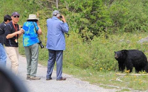 بی احتیاطی یک توریست در برخورد با خرس گریزلی