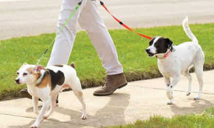 قانونی ناشناخته درباره ی قلاده سگ