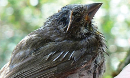گسترش عفونت کشنده در میان پرنده ها در شرق کانادا
