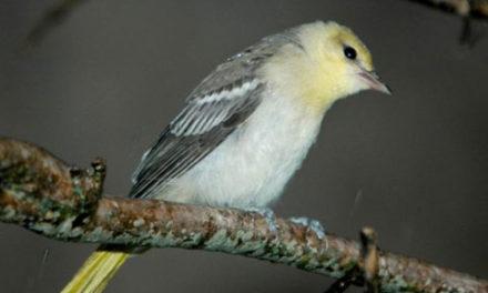 بازگشت پرنده مهاجر به میان خانواده اش البته با پرواز ایرکانادا