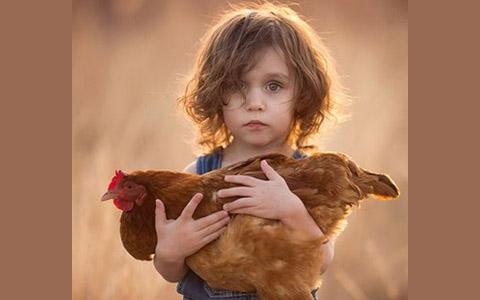 مرغ چند پا داره؟/عزت مصلی نژاد