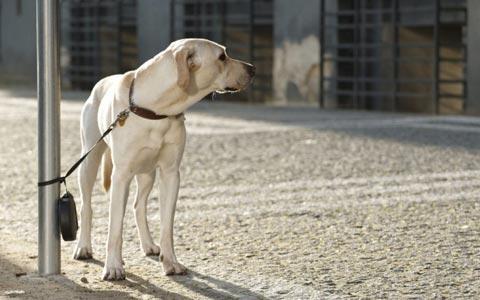 کتابفروشی ایندیگو به سگ ها خوشامد می گوید