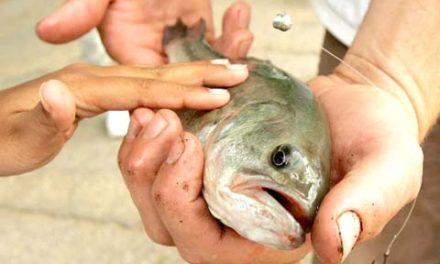 تجمع داروهای ضدافسردگی انسانی در مغز ماهی های رودخانه نیاگارا