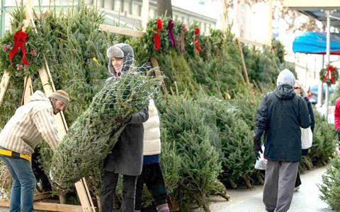 افزایش قیمت درخت های کریسمس به دلیل کاهش عرضه