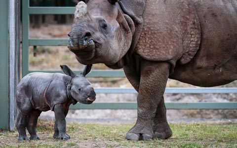 اولین نوزاد سال ۲۰۱۸ در باغ وحش تورنتو