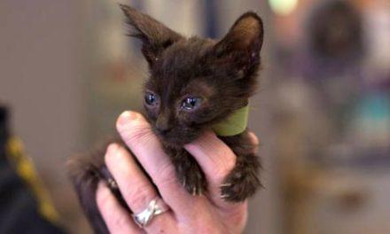 پیدا کردن ۱۴۶ گربه در خانه ای در انتاریو