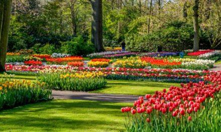 بهار امسال و جشنواره بزرگ گل لاله در اتاوا