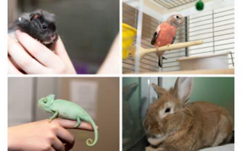 آیا به دنبال آوردن حیوان خانگی هستید؟