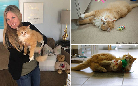 گربه ای که ۱۲ مایل راه پیمود تا به خانواده اش برسد، به یتیم خانه سپرده شد
