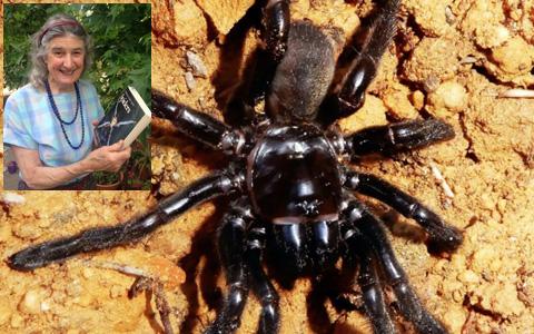 پیرترین عنکبوت جهان کشته شد