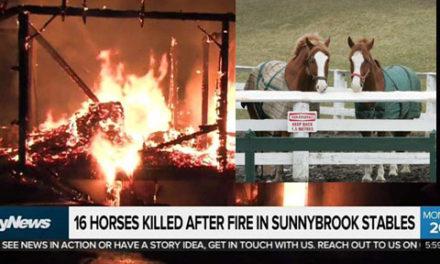 کشته شدن ۱۶ اسب در آتش سوزی اصطبل پارک سانی بروک