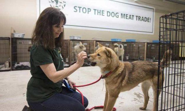 نجات سگ ها از کشتارگاهی در کره ی جنوبی