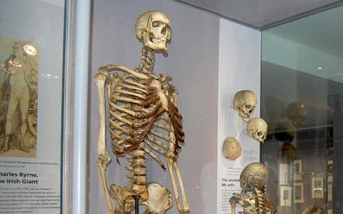 خاکسپاری مرد غول پیکر بعد از ۲۰۰ سال