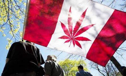 قانونی شدن ماری جوانا در مجلس سنای کانادا تصویب شد
