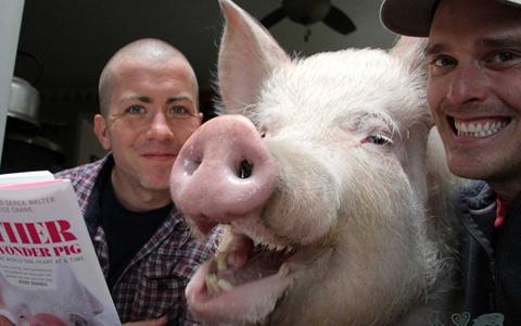 حیوانات بیمار کانادا زندگی شان را مدیون یک خوک هستند